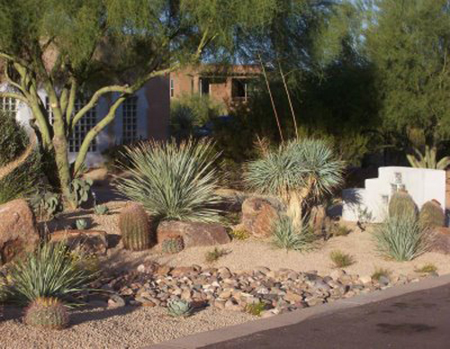 Nice Desert Landscaping