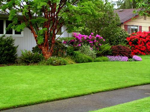 Nice Lawn Care