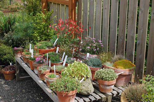 Cute Container Garden