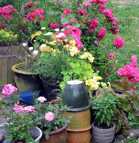 Nice Container Garden