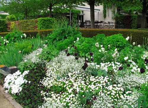 Sweet White Flower Garden